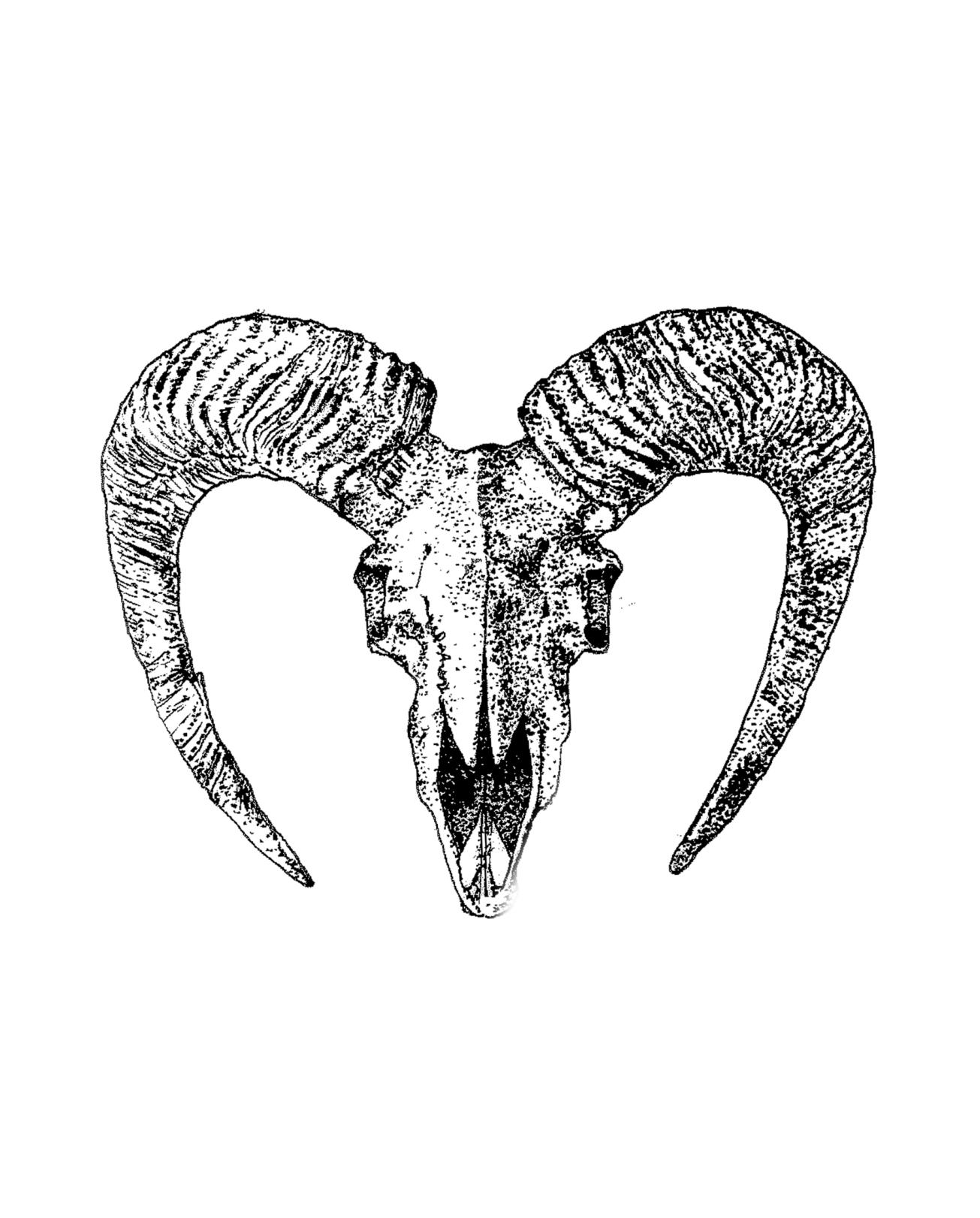 cabra skull ins.